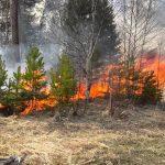 На Днепропетровщине пожарные спасли лес от огня
