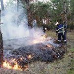 На Днепропетровщине спасатели за полчаса потушили лес, — ФОТО, ВИДЕО