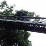 В Днепре пожарные спасли котика с 6-ти метровой высоты, — ФОТО