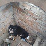 На Днепропетровщине пятеро спасателей доставали собаку из люка, — ФОТО