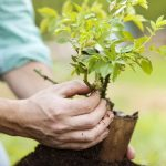 В Днепре предлагают начать массовую высадку деревьев
