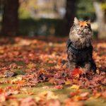 Шлепанцы с куртками и фото в листьях: как днепрянам подготовиться к осени