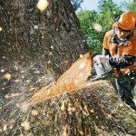 Обрезка и удаление аварийных деревьев: куда обращаться днепрянам