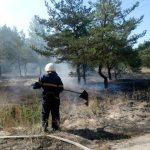 На Днепропетровщине участились пожары в лесах, — ФОТО, ВИДЕО