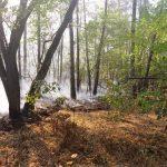 На Днепропетровщине горел лес, — ФОТО