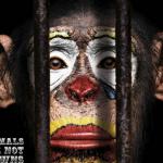 Украинцы требуют запретить использование животных в цирках