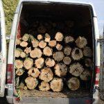 В Днепропетровской области незаконно спиливали деревья акации, — ФОТО