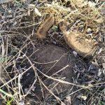 На Днепропетровщине в лесу нашли устаревшие мины и снаряды, — ФОТО