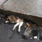 «Год начался со спасения пёсика», — ГСЧС в Днепропетровской области