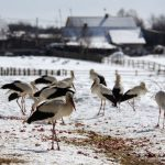 Рятувальники попередили про пориви вітру в Україні 21 січня