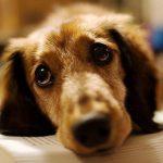 В Днепре спасатели достали собаку из колодца, — ВИДЕО
