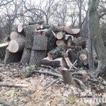 На Днепропетровщине полицейские задержали преступников-лесорубов, — ФОТО