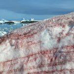 В Антарктиді «зацвів» сніг – фото