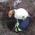 В Днепропетровской области собака упала в колодец и застряла, — ФОТО