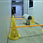 В Днепровской ветклинике сняли мотивационное видео с худеющим котом Антоном, — ВИДЕО