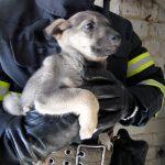 На Днепропетровщине спасатели достали застрявшего в подвале щенка, — ФОТО