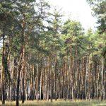 Жители Днепра просят сохранить и восстановить лес на ж/м Северный