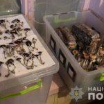 Под Днепром задержали группировку, выращивающую галлюциногенные грибы, — ФОТО, ВИДЕО