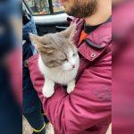 В Днепре пожарные спасали кошку, которая упала с 9-го этажа, — ФОТО