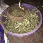 На Днепропетровщине судят мужчину, который хранил 3 кг марихуаны, — ФОТО