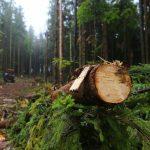 В Днепропетровской области незаконной вырубкой леса злоумышленники нанесли ущерб государству в размере более миллиона гривен