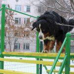 В Днепре просят создать новую площадку для выгула и тренировки собак