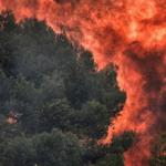 3 пожара за сутки: спасатели просят жителей Днепропетровщины не сжигать траву, — ФОТО