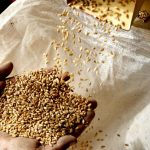На складах Держрезерву не дорахувалися зерна на понад 800 мільйонів гривень – МВС