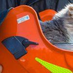 В Днепре кот застрял на высоте 15 метров, — ВИДЕО