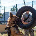 В Каменском открыли первую площадку для выгула и тренировки животных