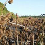 Падіння легкомоторного літака на Сумщині – пілот загинув