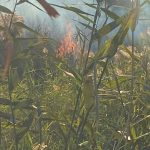 В Днепре в районе Березановки горят камыши, — ФОТО