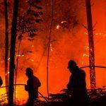 73 пожара за сутки: спасатели просят жителей Днепропетровщины не сжигать траву, — ФОТО