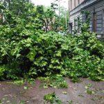 У Львові через падіння дерева в негоду травмована людина – ДСНС