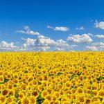 Спека в Україні цього тижня малоймовірна – синоптики