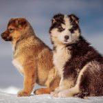 Обов'язкове страхування відповідальності власників собак