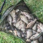 КУДА ПОЕХАТЬ НА РЫБАЛКУ: Рыбные места в Синельниковском и Васильковском районах