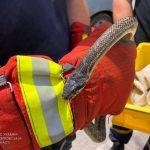 Возле днепровского магазина обнаружили очередную змею