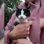 В Днепре развернули спасательную операцию из-за кота