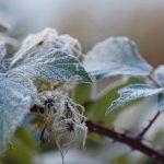 ДСНС попереджає про заморозки в ніч на 4 жовтня
