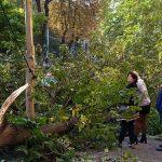 В центре Днепра огромное дерево упало на автомобили и повредило их