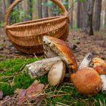 Сходили за грибами: под Днепром в лесопосадке обнаружили труп мужчины