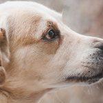 Марш за права животных в Днепре: почему это важно и зачем туда идти
