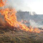 В Днепре обнародовали список поджигателей листьев