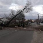 В Днепре и области после бури повалены деревья и оборваны провода